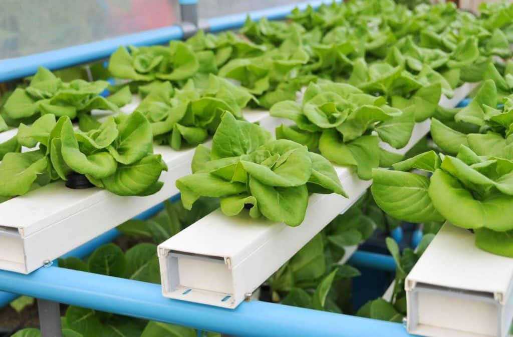 Aquaponics description, advantages and disadvantages