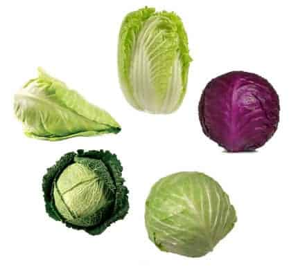 Varieties Of Cabbages | Cabbage Farming Guide