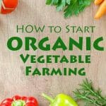 How To Start Organic Vegetable Farming