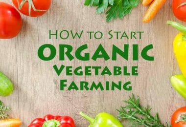 Start Organic Vegetable Farming [Guide to Success] - Farming