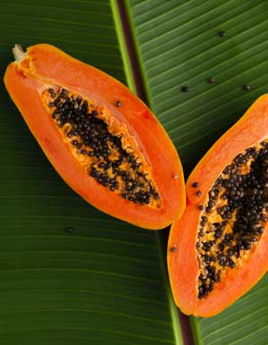 Benefits Of Papaya Farming