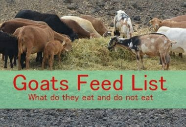 7 steps to start goat farming business for profit - Farming Method