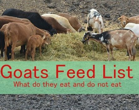 Goats Feed List: What do Goats Eats and Don't Eat - Farming
