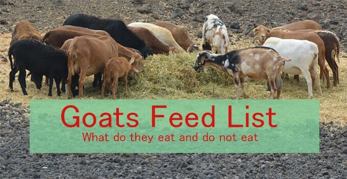 goat feed list