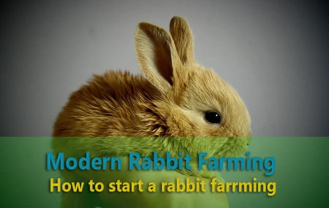 start rabbit farming