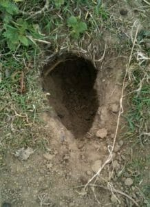 rat hole in garden yard