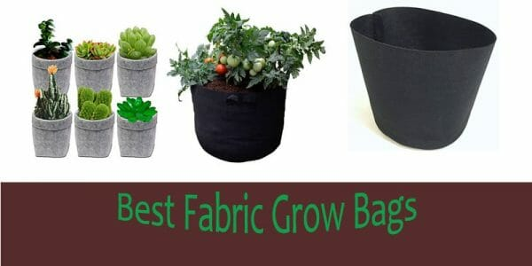 11 Best Fabric Grow Pots Gmo Bags
