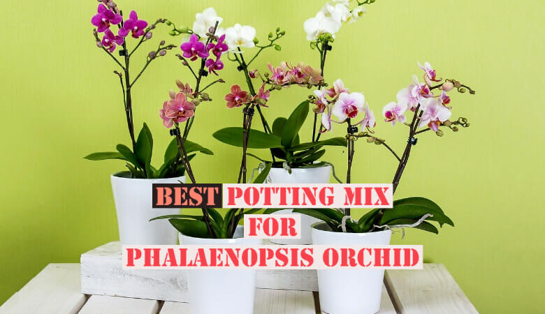 Best Potting Mix for Phalaenopsis Orchid