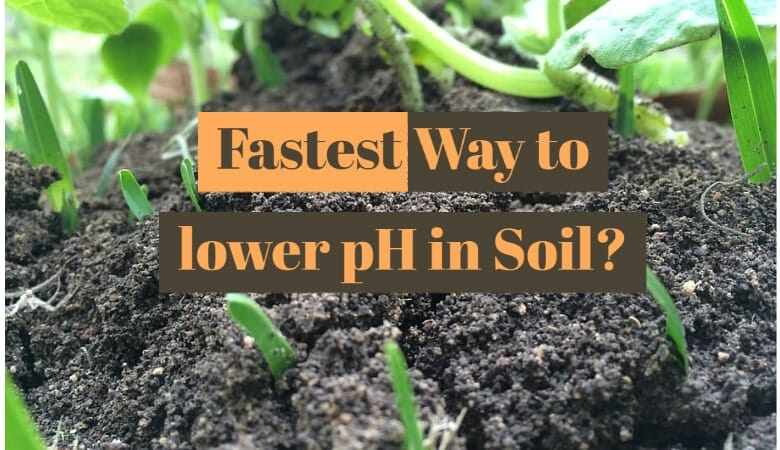 Fastest Way to lower pH in Soil
