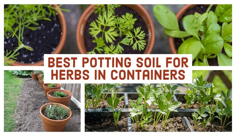 Best Potting Soil for Herbs in Containers