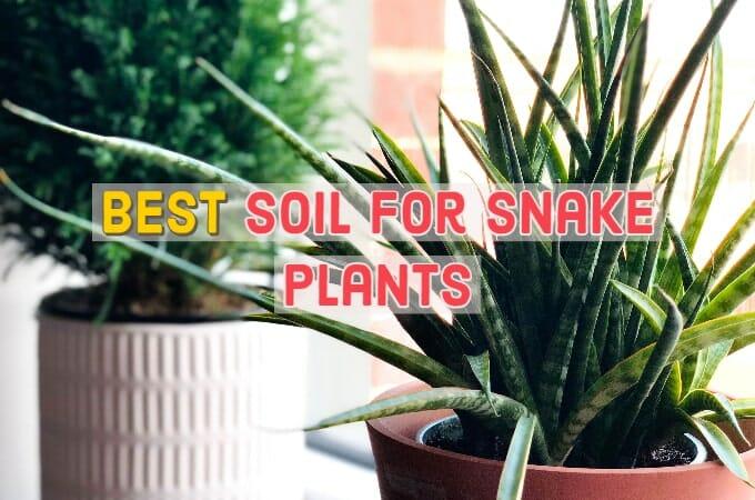 Best Soil for Snake Plants