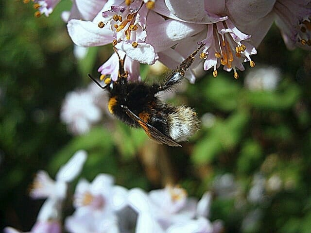 Ecological Requirement for Bee farming
